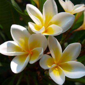 flor-de-mayo-venta-cancun