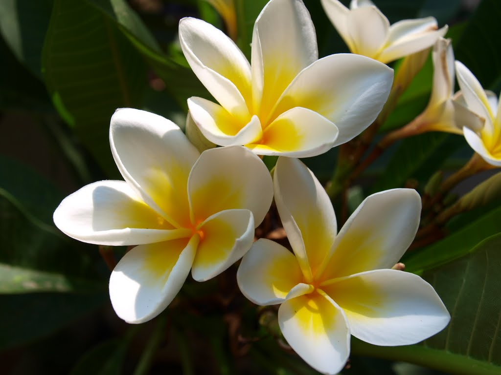 flor de mayo venta de plantas medicinales munay herbolaria cancun